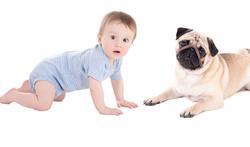 Een hond in huis beperkt het risico op een voedselallergie bij kleine kinderen