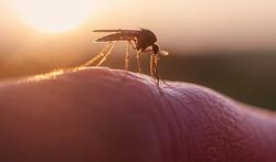 Muggenwerende producten, hoe werken ze eigenlijk?