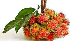 Mag je planten of vruchten meebrengen uit het buitenland?