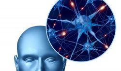Foute bekabeling in 'tweede brein' kan maag- en darmklachten verklaren
