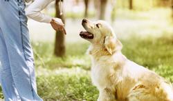 Hoe maak je je hond duidelijk dat jij de baas bent