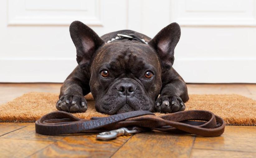 123-hond-dieren-luisteren-05-17.jpg