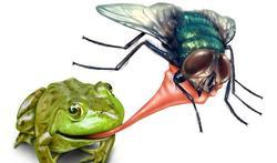 Natuurlijke remedies om insecten uit je buurt te houden