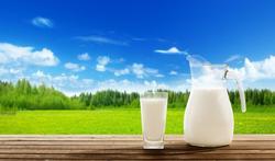 Wereldmelkdag:  Is melk alleen geschikt voor kalveren?