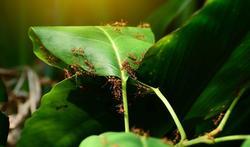 123-mieren-steken-05-18.jpg