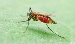 Wanneer moet je preventief malariapillen nemen?