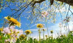 123-natuur-zon-lucht-hooik-planten-04-17.jpg