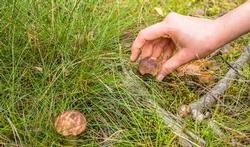 Wat doen als u een paddenstoelvergiftiging vermoedt?