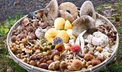 Twaalf tips als u zelf paddenstoelen wilt plukken