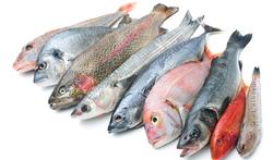 123-rauwe-vis-voed-12-18.png