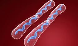 123-tek-chromos-genet-mat-170-06.jpg
