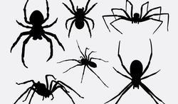 Spinnen: zelden gevaarlijk