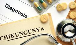 123-txt-chikungunya-08-17.jpg