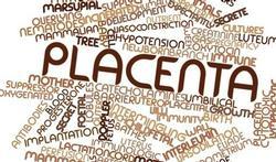 Placenta-afwijkingen hebben invloed op ziekte en ontwikkeling te vroeg geborenen