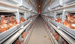 Vogelgriep (Aviaire influenza)