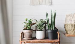 Kunnen planten echt de lucht zuiveren binnenshuis?