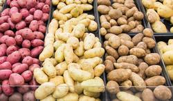 Zachtkokende of hardkokende aardappelen?