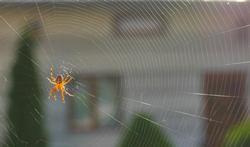 Zo houd je spinnen uit je buurt