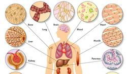 7 tips om je metabolisme te verbeteren
