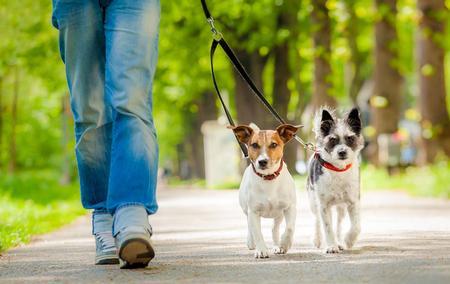 123m_wandelen-hond.jpg