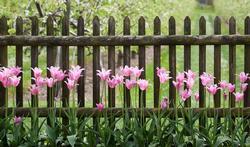 HD-tuin-gezellig-tulp-06-18.jpg