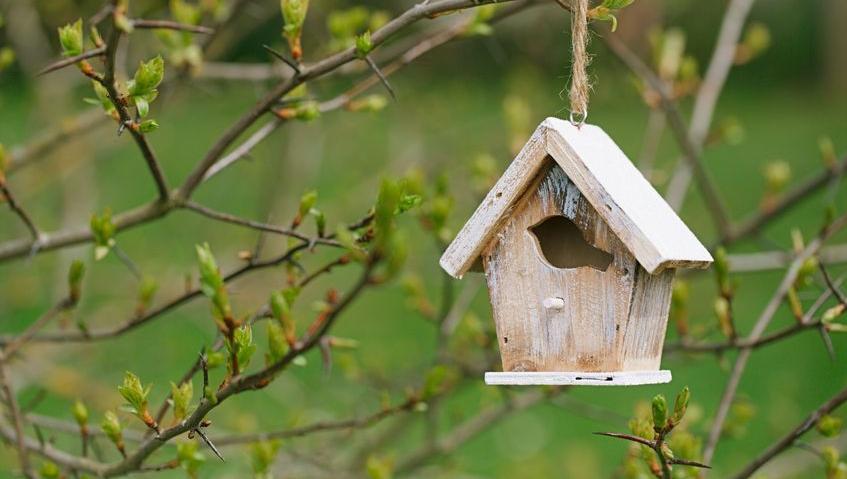 HD-tuin-gezellig-vogeltjes-06-18.jpg