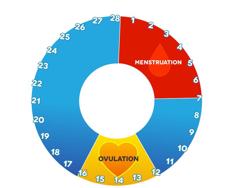 f-123-zwkal-vruchtbaarh-menstr-cyclus-01-19.png