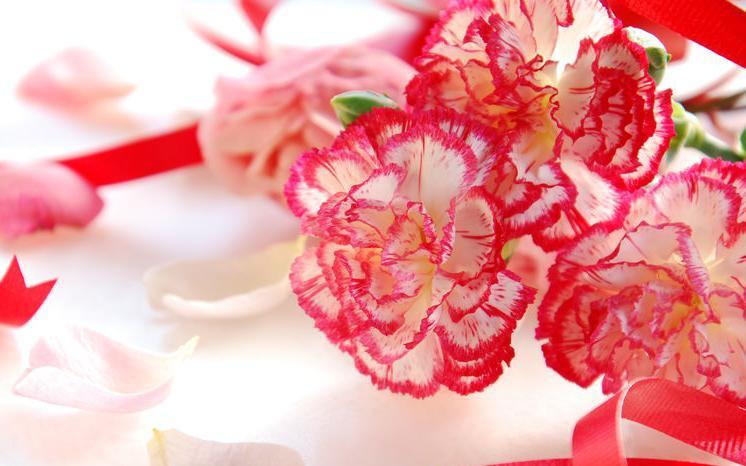 f123-h-bloemen-anjers-05-19.jpg