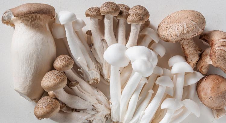 f123-h-eetbaar-paddenstoel-04-19.jpg