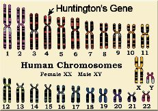 huntington-chromos.jpg