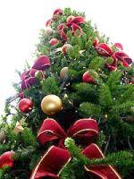 Kerstboom: oorzaak van schimmels in huis?