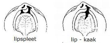 lip-kaak-367.jpg
