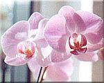 orchidee.jpg