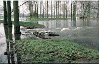 overstroming-weide.jpg