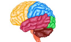 t-123-brein-hers-geheugen-12-18.png