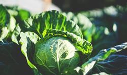 17 tips om je kinderen groenten te laten eten