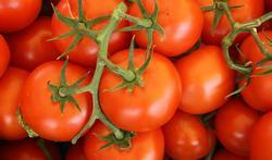 Organische tomaten bevatten meer vitamine C en lycopeen