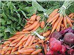 wortelen-bieten.jpg