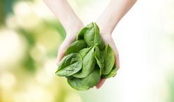 Régime : quels légumes pauvres en glucides ?