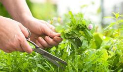 Comment sécher ses herbes aromatiques et faire du vinaigre ?