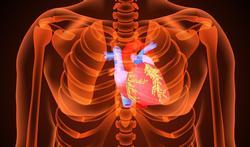 Nieuwe biologische hartklep is veelbelovend voor actieve vijftigers en zestigers