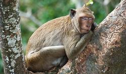 Pourquoi dormons-nous moins longtemps que les singes ?
