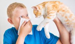 Ben je allergisch voor huisdieren?