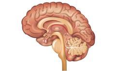 Waar in je brein zit je bewustzijn?