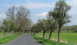 Bomen langs de weg: vriend of vijand?