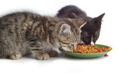 Accueillir un chat : une décision réfléchie
