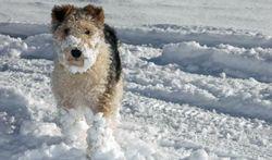 Comment protéger son chien contre le froid ?