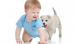 Allergie : le chien protège l'enfant