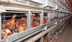 Vaker longontstekingen in de buurt van veehouderijen