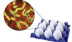 123-eieren-besmet-salmonella-voedselverg-05-18.jpg